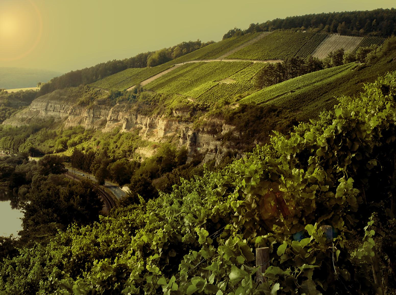 Startseite - Weingut am Stein